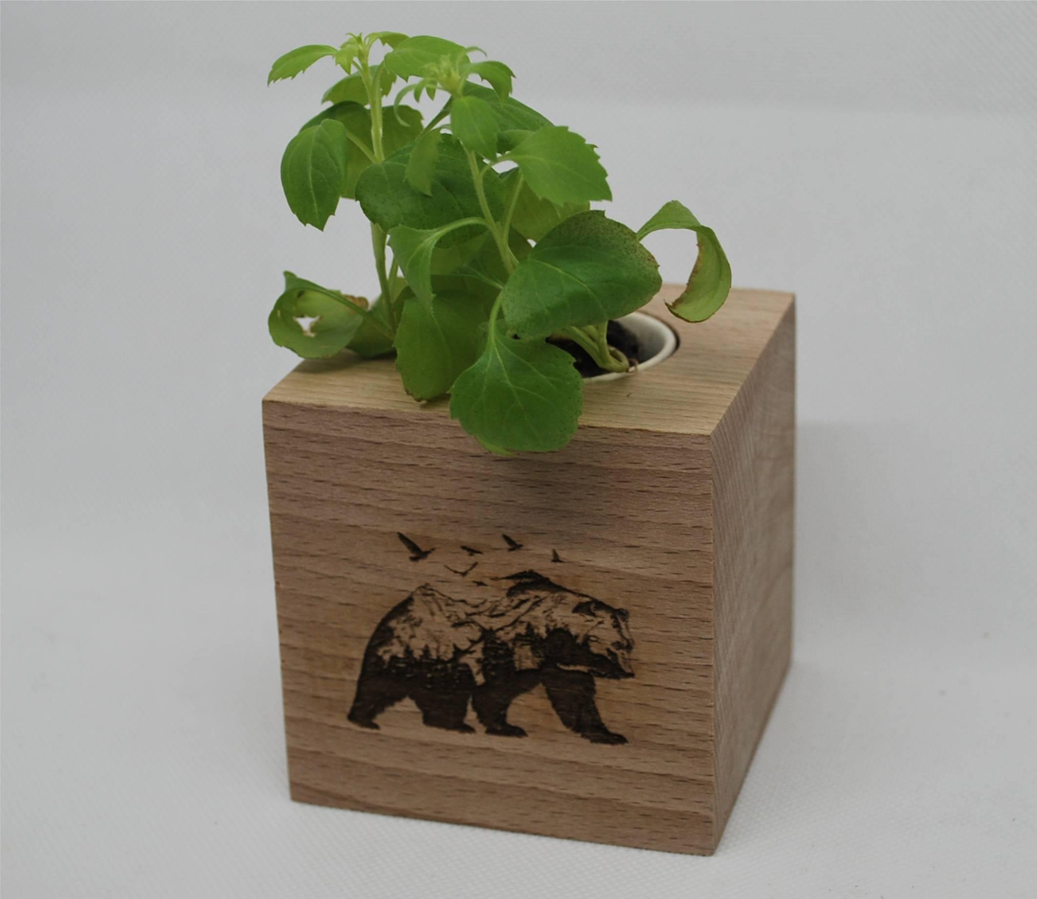 Cube écologique en hêtre massif avec plante à faire pousser